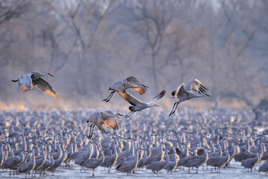 In beeld: plaatsen waar spectaculaire aantallen vogels bij elkaar komen