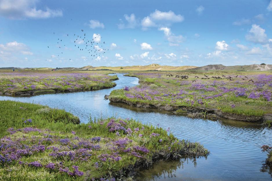Als de polders konden praten: een tijdreis langs de verdwenen zwinhavens