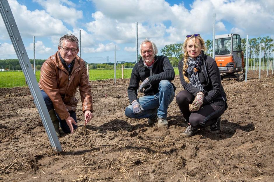 Koppel gaat wijn verbouwen op hoeve 't Neerhof in Sint-Andries