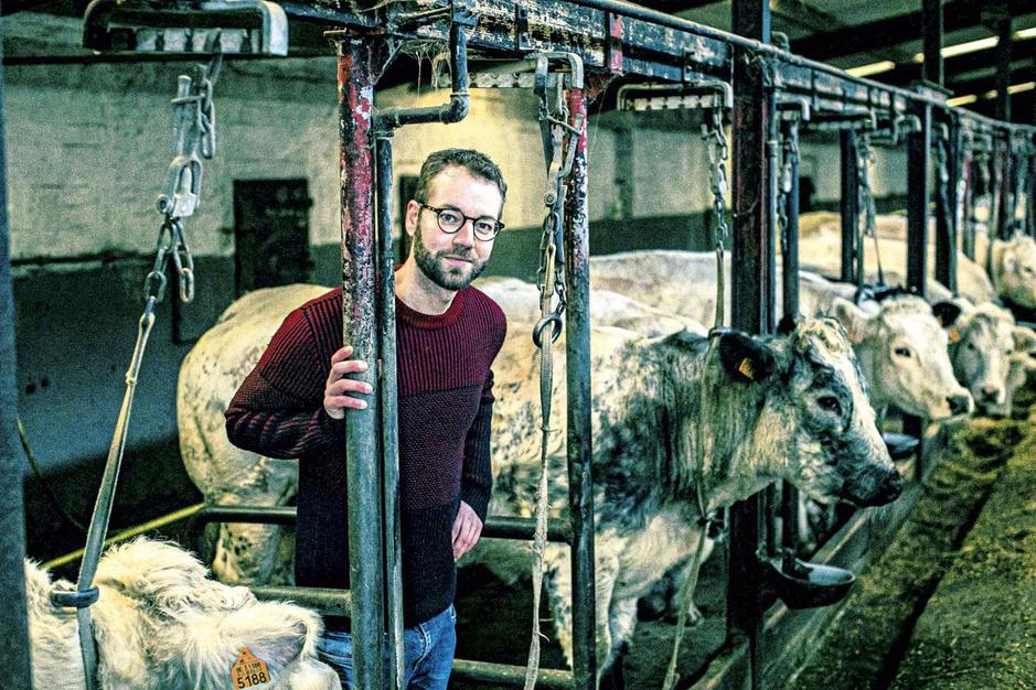 Bram Bombeek, de N-VA-woordvoerder die boer werd: 'Een koe is pure alchemie'