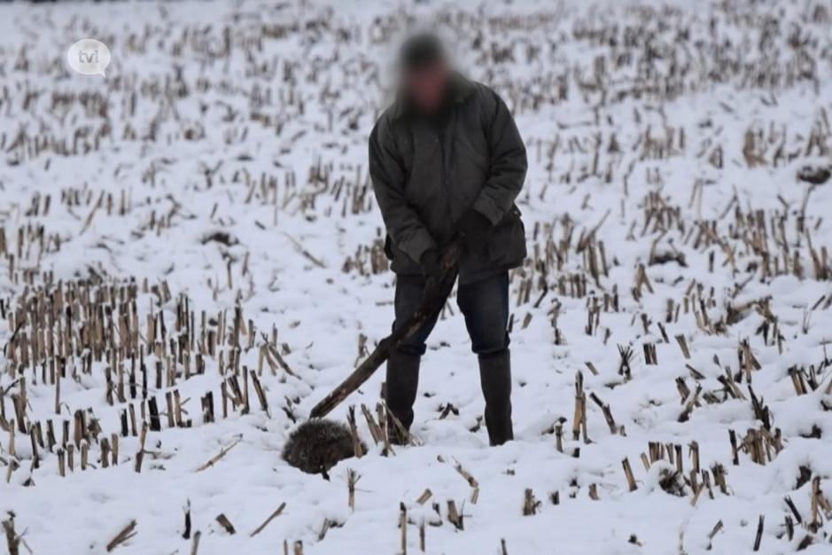 Eindeloze strijd tegen jachtincidenten: 'De dassenstropers doen gewoon voort, zelfs na veroordeling'