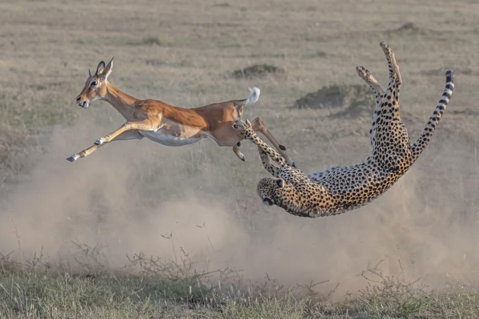 De Big Picture fotowedstrijd viert met deze prachtige foto's de rijkdom van de natuur