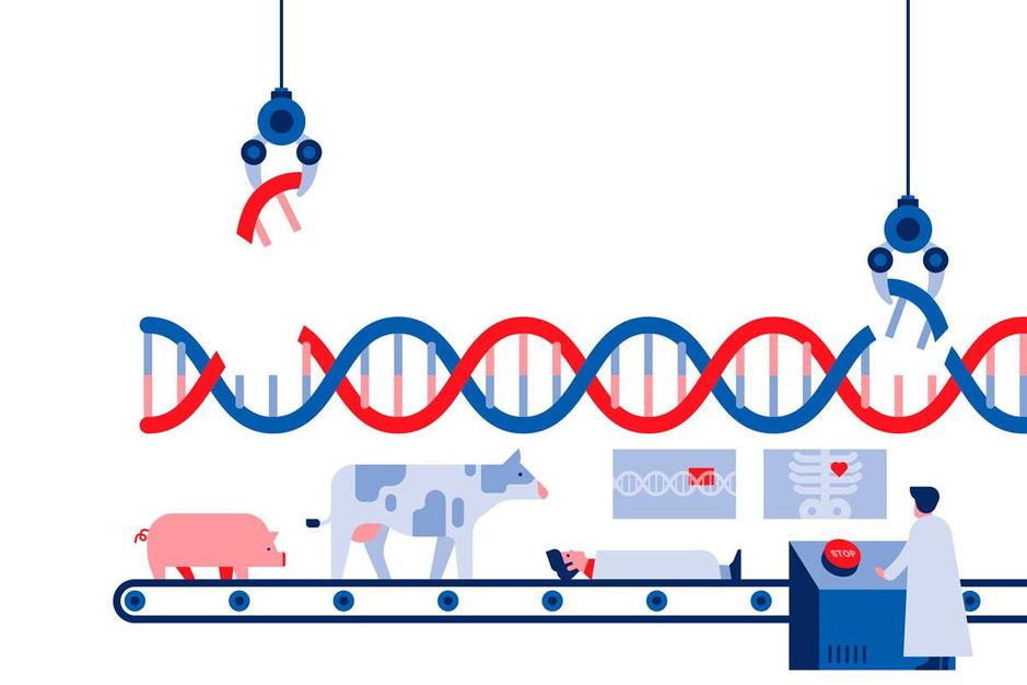 Gentherapie met Crispr-Cas9: kan genetisch knip-en-plakwerk de wereld veranderen?