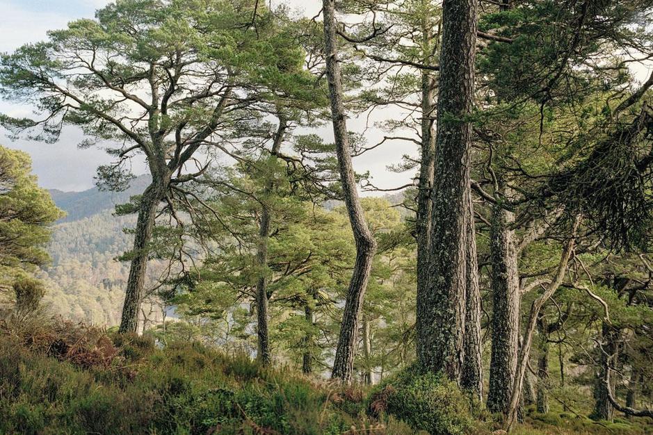 Expeditie Borealis: fotograaf Jeroen Toirkens reisde door de oerbossen