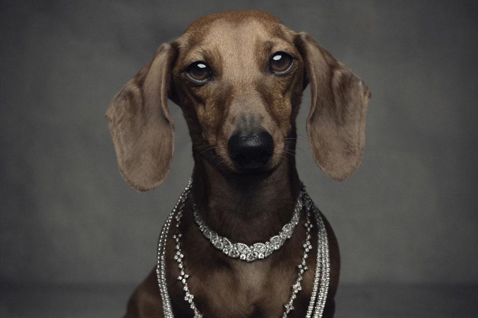 Luxebeesten: hoe verwend is uw hond?