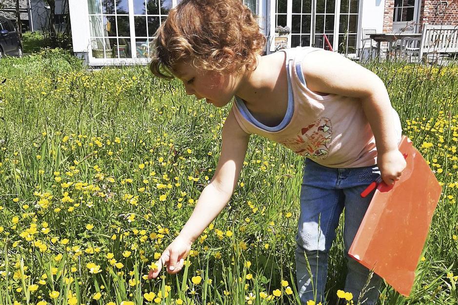 Hoe u met 'Maai Mei Niet' elke dag 5 miljoen bijen te eten gaf
