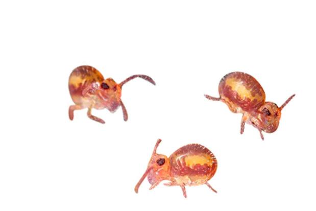 Beestenboel: de springstaartjes zijn met veel, maar we zien ze niet
