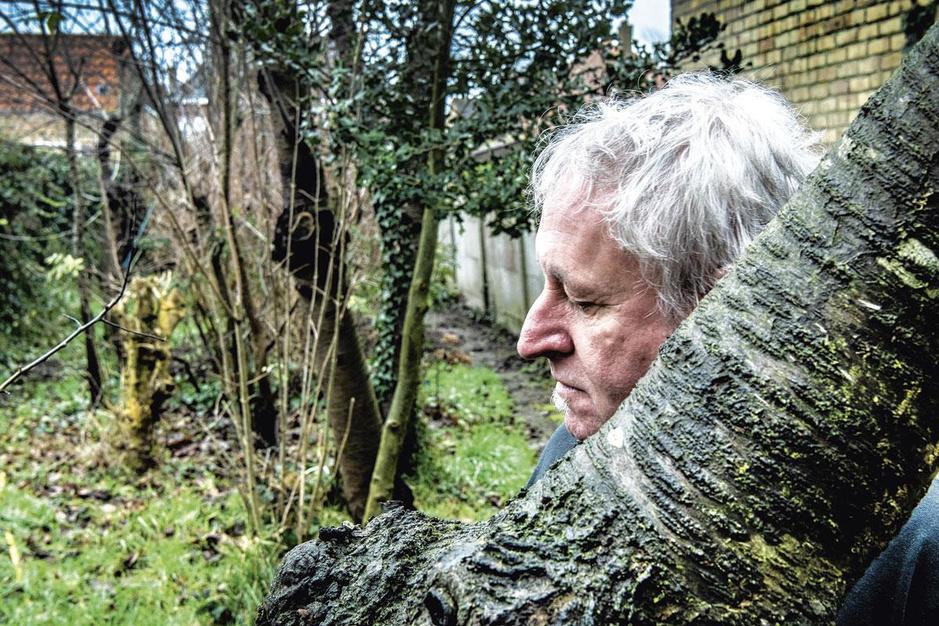Tien jaar burenruzie: 'Uw bomen zorgen voor geluidsoverlast'