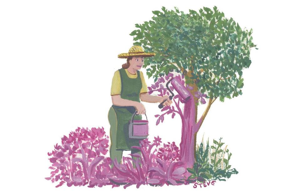 Factcheck: nee, de kleur van bloemen speelt geen rol voor ons psychisch welzijn'