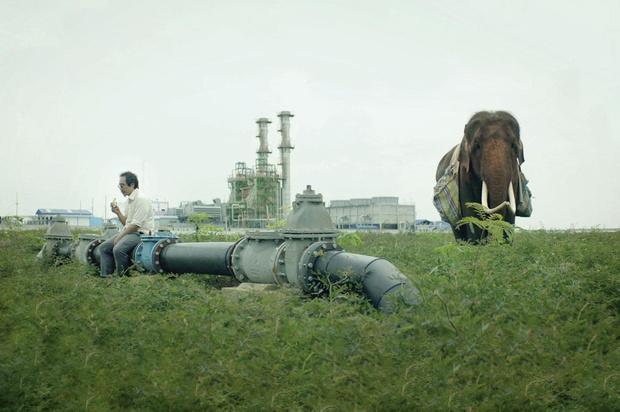 Tv-tip: 'Pop Aye', een licht surrealistische tragikomedie over een architect en zijn verloren olifant