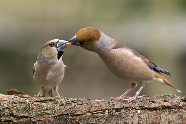 WWF: biodiversiteit ging afgelopen 30 jaar in België licht vooruit
