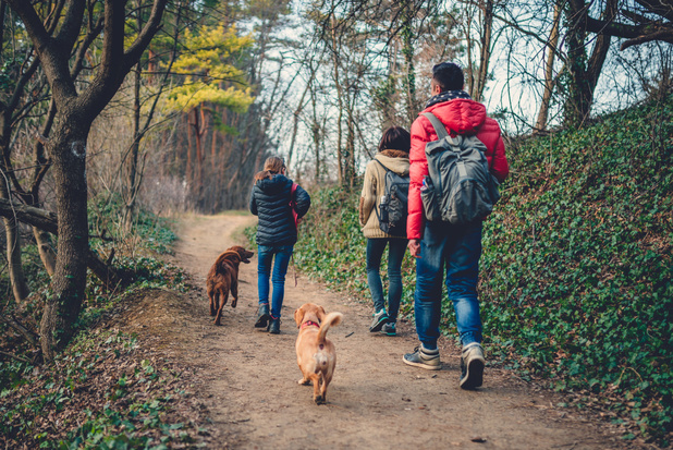 Dit zijn de kanshebbers voor 'Wandelroute van het jaar' in de Benelux