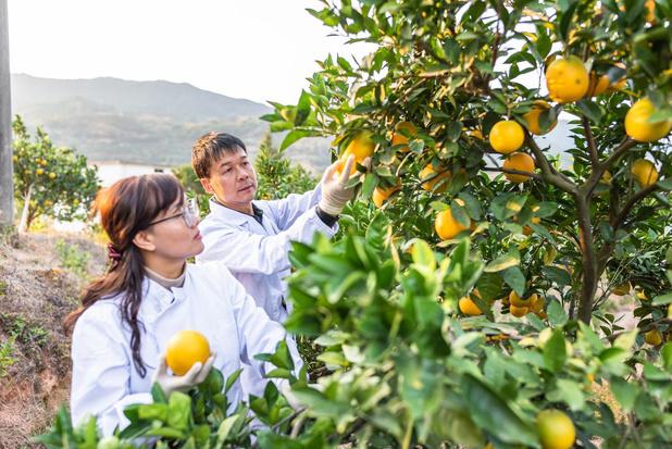 Vendre Asian Citrus