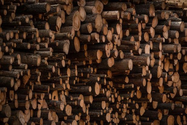 Europees Parlement vraagt dat EU-verordening over hout wordt uitgebreid naar gedrukte producten