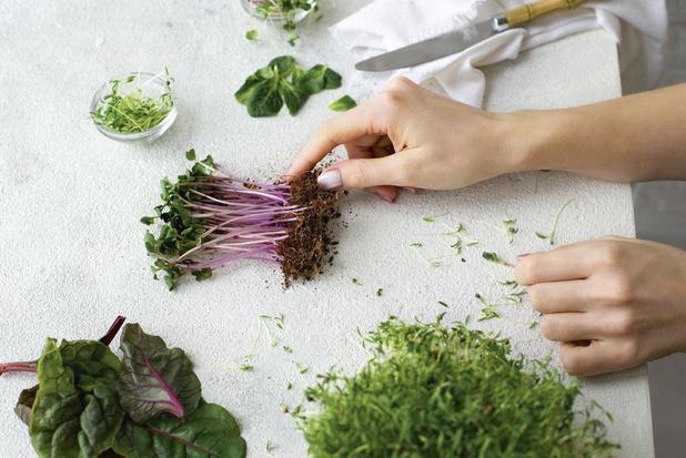 Mensen eten meer microgroenten