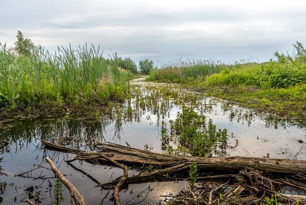Helft van de nieuwe Vlaamse investeringen tegen droogte gaat naar natte natuur