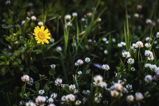 'Vlaanderen wordt te warm voor inheemse plantensoorten'