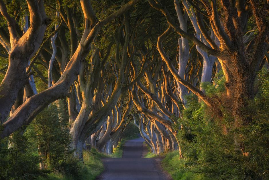 In beeld: de meest bijzondere bomen in de wereld