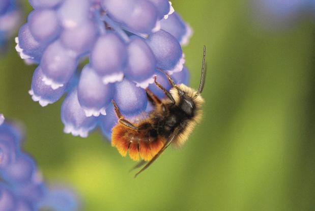 """""""En mai, tonte à l'arrêt"""": comment vos jardins ont aidé la nature"""
