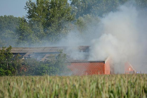 Stal vol stro in brand in Jonkershove maar alle varkens zijn gered