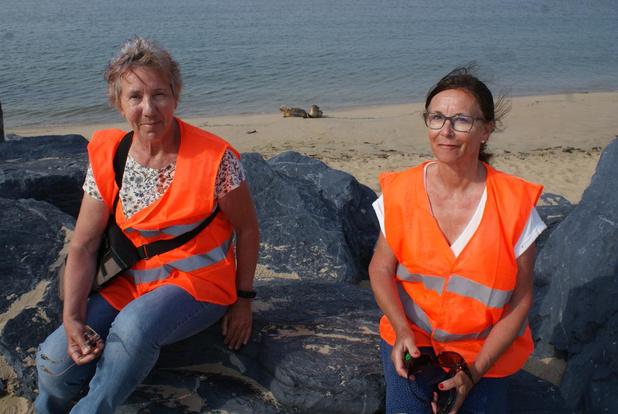 Vrijwilligers waken over welzijn zeehonden op strand in Oostende