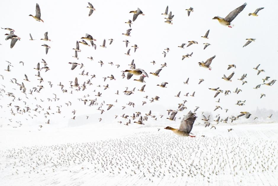 Drone Photo Awards: een selectie van de mooiste luchtfoto's van 2021