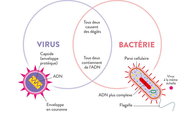 Virus ou bactérie ?