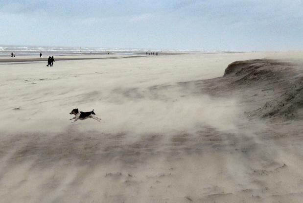 Natuurpunt vraagt om meer natuur op het strand voor kustbescherming