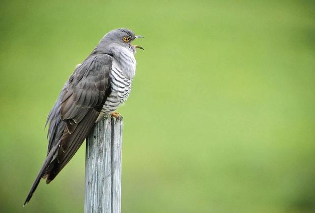 Au son des oiseaux