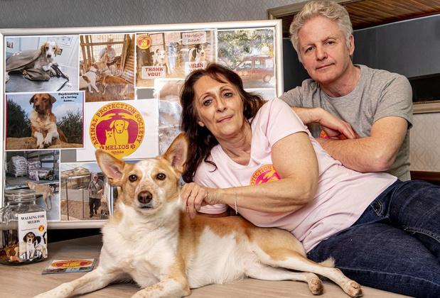 Benefietwandeling voor verwaarloosde honden en katten in Beveren