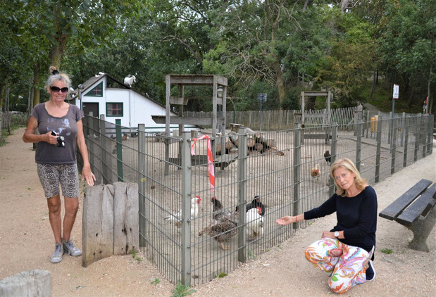 """Gemeente De Haan reageert op klacht rond dierenverwaarlozing: """"Stop met dieren te dumpen"""""""