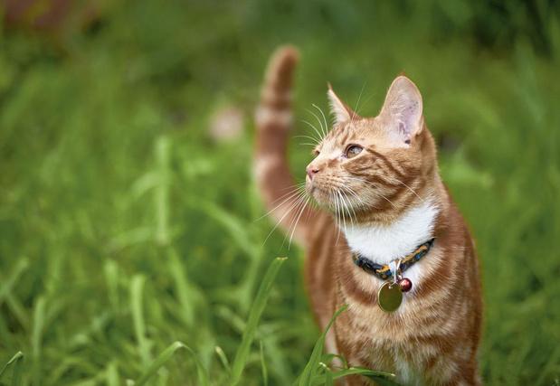 Kattenklok