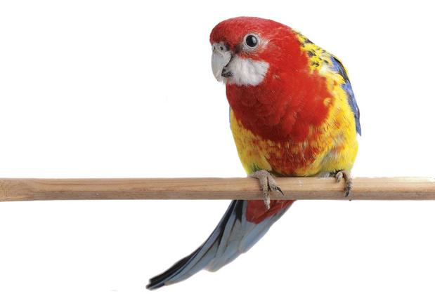 Vreemde vogel in huis