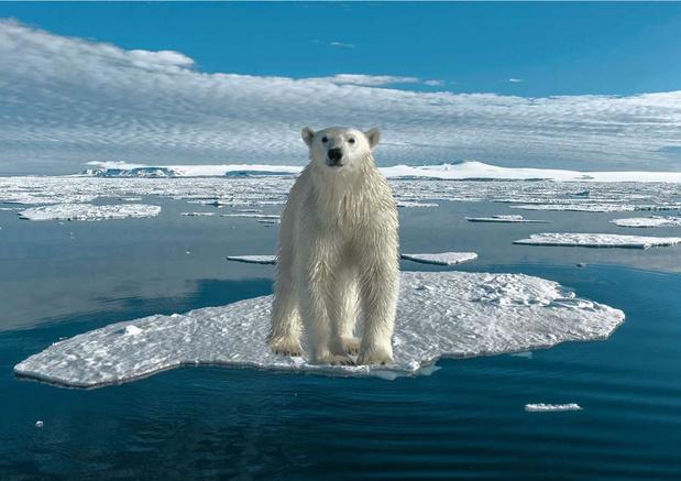 Le mercure frôle les 35°C dans l'Arctique
