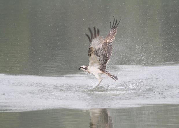 Help mee vogels tellen op Internationale vogeltrekdagen in Zwin Natuur Park