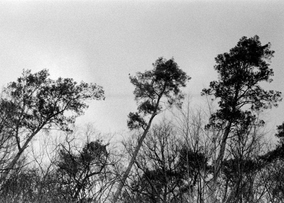 Regard singulier sur l'Ardenne (en images)
