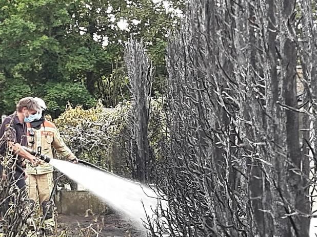 Brandweer rukt uit voor haagbrand in Beveren