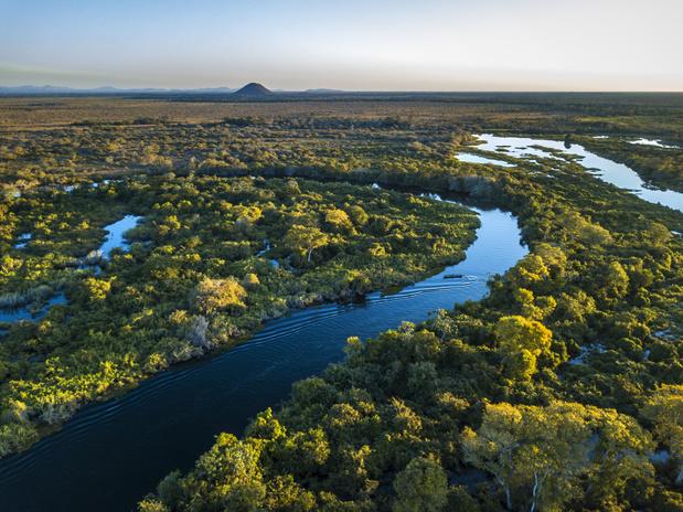 Braziliaanse savanne verdwijnt in alarmerend tempo