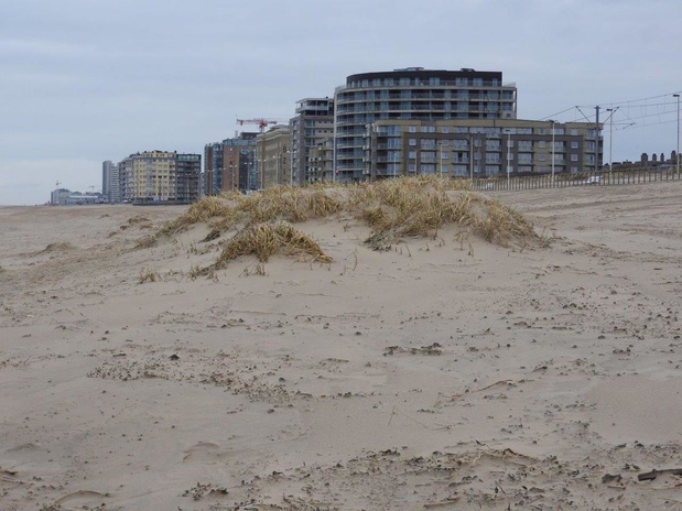 Politie onderzoekt vernieling jonge duinen in Oostende