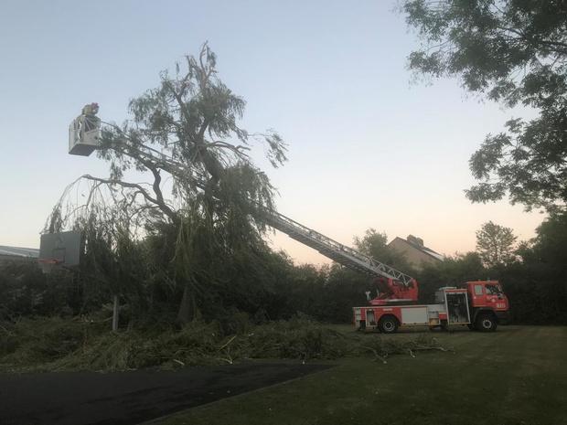 Stevige wind zorgt voor boomschade