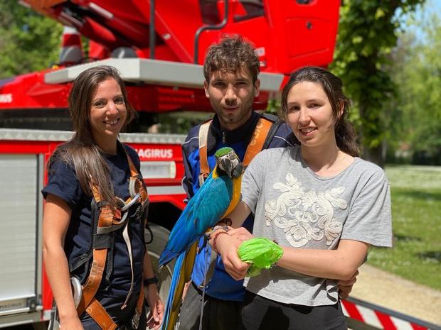 Brandweer redt man en papegaai uit boom in Minnewaterpark