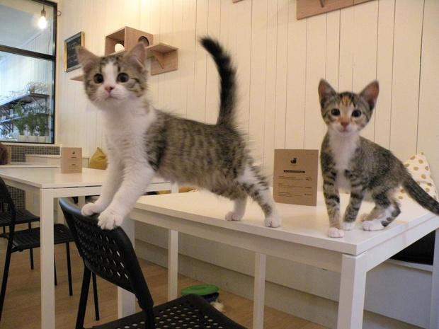 """Sluiting dreigt voor Kortrijks kattencafé: """"Ik hoop nog een overnemer te vinden"""""""
