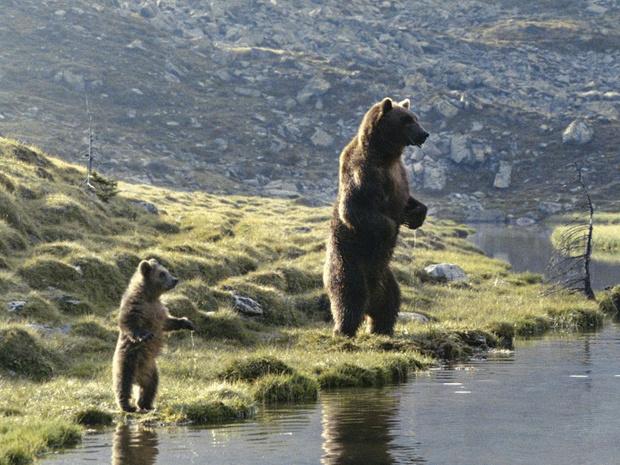 [À la télé ce soir] L'Ours