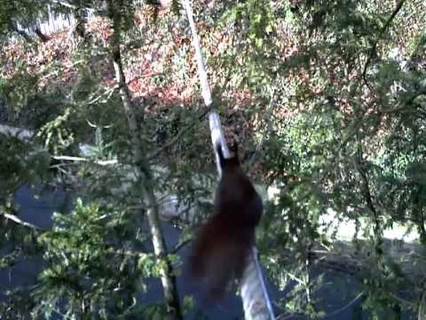 Eichhörnchenbrücke