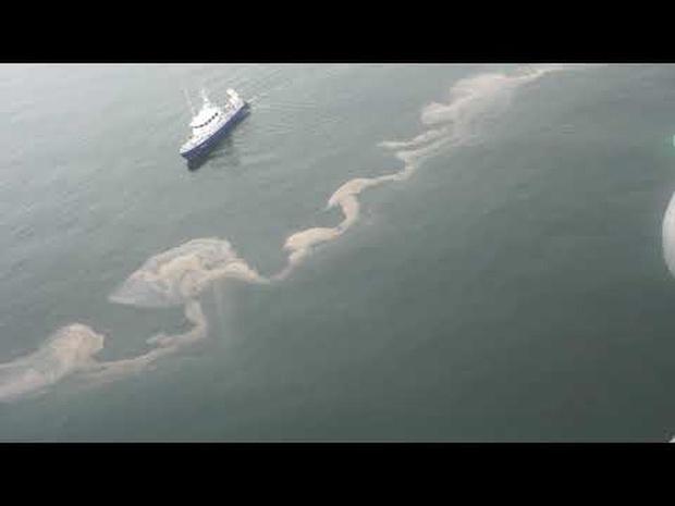 Zeevonk aan onze kust