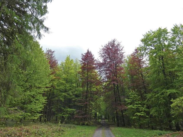 Expédition dans nos belles forêts d'Ardenne: un week-end au fond des bois