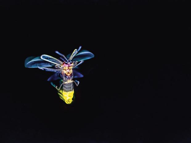 Vliegende vuurvliegjes
