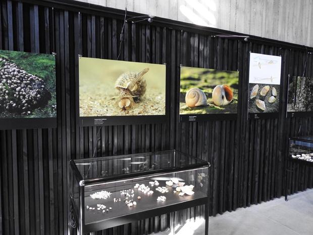 Het Zwin Natuur Park verhuist twee tentoonstellingen naar volgend jaar