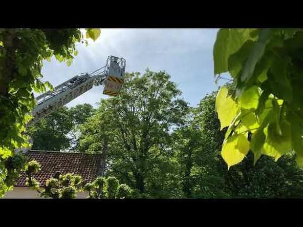 Man en papegaai gered uit boom