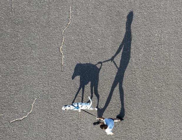 Une nouvelle application pour signaler ou retrouver un animal perdu en Belgique
